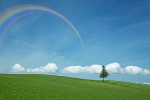 草原と虹の架かる空の写真素材 [FYI03949702]