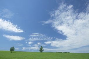 二本の木の草原と雲の写真素材 [FYI03950046]