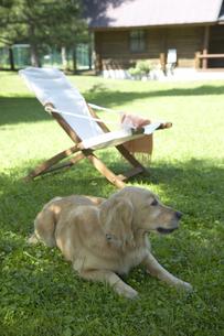 木陰の犬と白いチェアの写真素材 [FYI03950082]