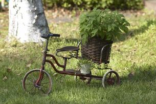 植木鉢を乗せた三輪車の写真素材 [FYI03950085]