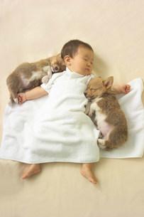 赤ちゃんの写真素材 [FYI03950684]