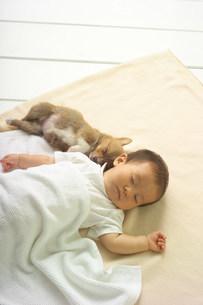 赤ちゃんの写真素材 [FYI03950685]