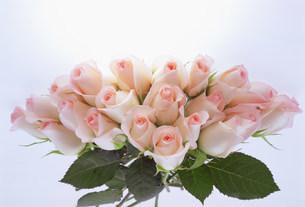 花の写真素材 [FYI03950975]