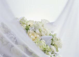 花の写真素材 [FYI03950983]