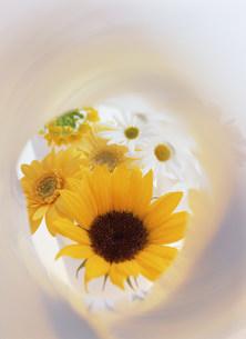 花の写真素材 [FYI03950995]