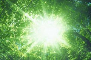 射光の写真素材 [FYI03951086]
