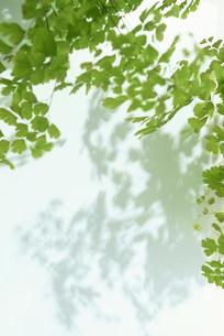 葉の写真素材 [FYI03951091]