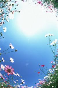 花と空の写真素材 [FYI03951108]