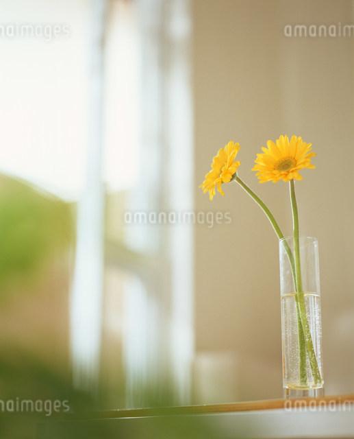 二厘の花の写真素材 [FYI03952043]