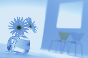 飾られた花の写真素材 [FYI03952067]