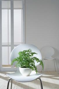 白い二脚の椅子の写真素材 [FYI03952192]