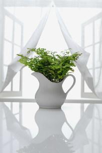 窓とグリーンの写真素材 [FYI03952237]