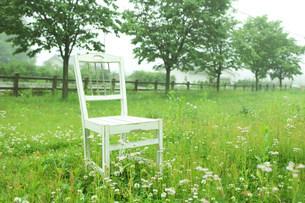 草原の白い椅子の写真素材 [FYI03952270]