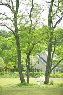 芝生に立つ木の写真素材 [FYI03952285]