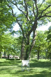 木陰の中の白い椅子の写真素材 [FYI03952293]