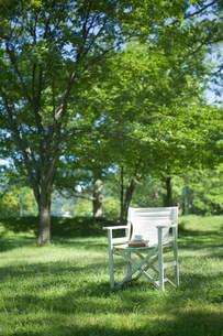 木陰の中の白い椅子の写真素材 [FYI03952294]