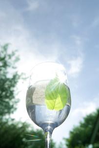 グラスの中の葉の写真素材 [FYI03952329]