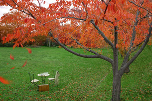 紅葉の中のイスとテーブルの写真素材 [FYI03952398]