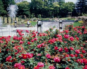 新緑の靭公園の写真素材 [FYI03952579]