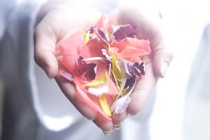 両手いっぱいに持った花びらの写真素材 [FYI03952985]