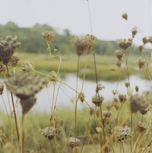 ケープコッドの海岸沿いの草花の写真素材 [FYI03953213]