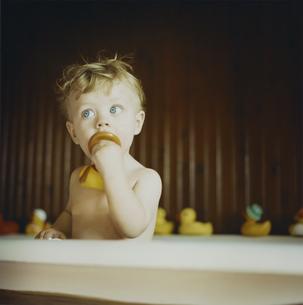 アヒルのおもちゃとお風呂に入っている男の子の写真素材 [FYI03953433]