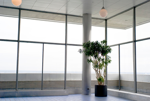 窓際の観葉植物の写真素材 [FYI03954151]
