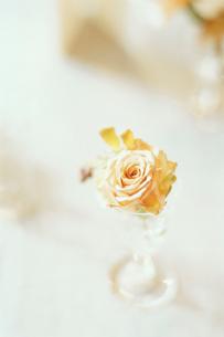 グラスに活けられた花の写真素材 [FYI03954332]