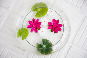 器に浮かべられた草花の写真素材 [FYI03954374]