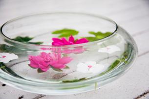 器に浮かべられた草花の写真素材 [FYI03954376]