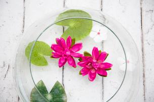 器に浮かべられた草花の写真素材 [FYI03954378]