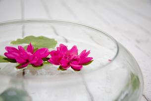 器に浮かべられた草花の写真素材 [FYI03954379]