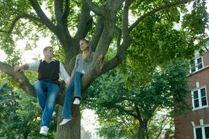 木に座る男女学生の写真素材 [FYI03954528]
