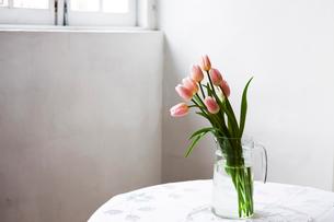 花瓶に活けられたピンクのチューリップの写真素材 [FYI03955591]
