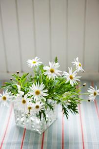 花瓶に活けられた白い花の写真素材 [FYI03955592]