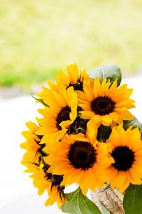 ひまわりの花の写真素材 [FYI03955624]