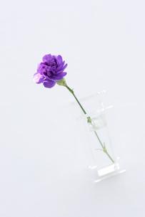 グラスに活けられた紫の花の写真素材 [FYI03955755]