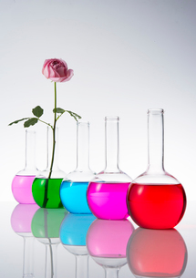 カラフルな色水とバラの写真素材 [FYI03955878]