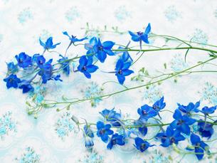 花柄クロスと青い花々の写真素材 [FYI03956087]