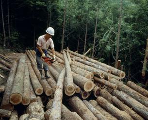 材木の寸法切の写真素材 [FYI03956428]