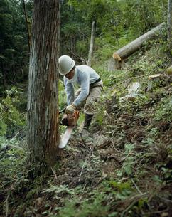 森林の伐採の写真素材 [FYI03956430]