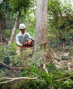 樹木の伐採の写真素材 [FYI03956458]