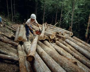 材木の寸法切の写真素材 [FYI03956573]