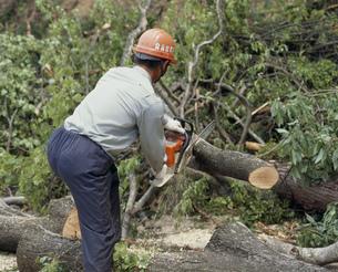 樹木の伐採の写真素材 [FYI03956579]