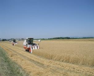小麦の収穫の写真素材 [FYI03956592]