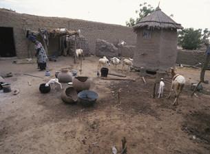 家畜と穀物倉庫の写真素材 [FYI03957184]