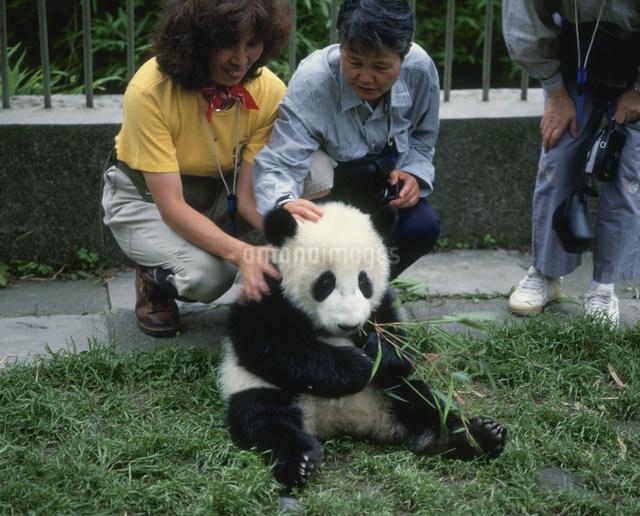 パンダの写真素材 [FYI03957216]