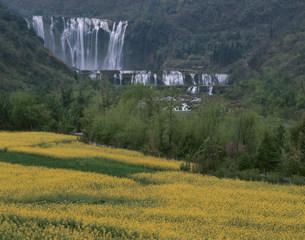 九龍瀑布と菜の花の写真素材 [FYI03957487]