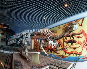 博物館 恐竜の写真素材 [FYI03957545]