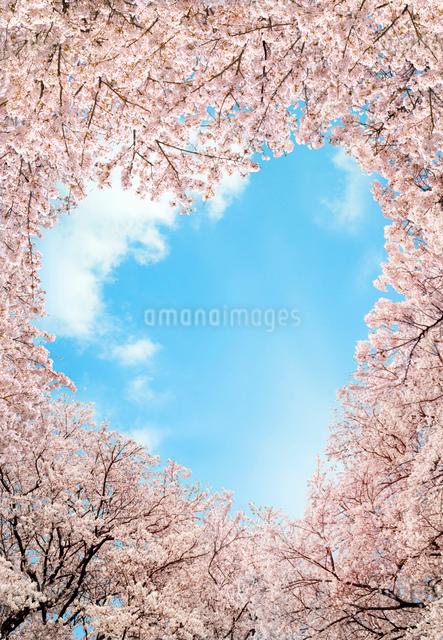 桜とハート形に開いた空の写真素材 [FYI03957761]